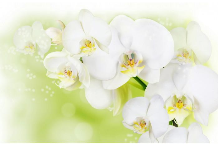 Модульная картина  Белая орхидея