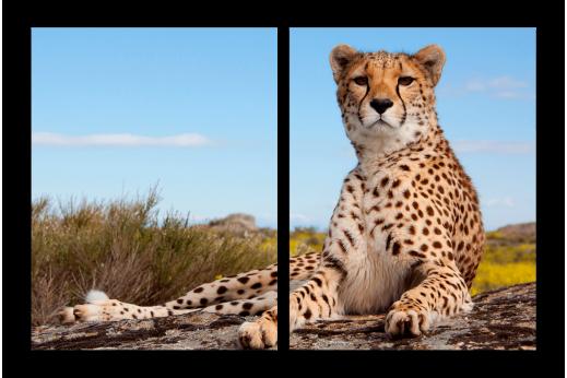 Модульная картина Леопард